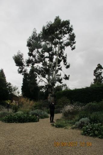 Pic of gravel garden (Beth Chatto's Garden)