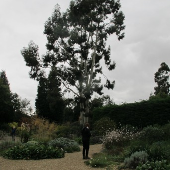 Pic of gravel garden (Beth Chatto's Garden)
