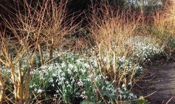 Stunning display in the Winter Garden