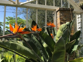 Greenhouse at Myddleton House May 2018
