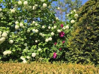 Theobalds Farmhouse Garden May 2018